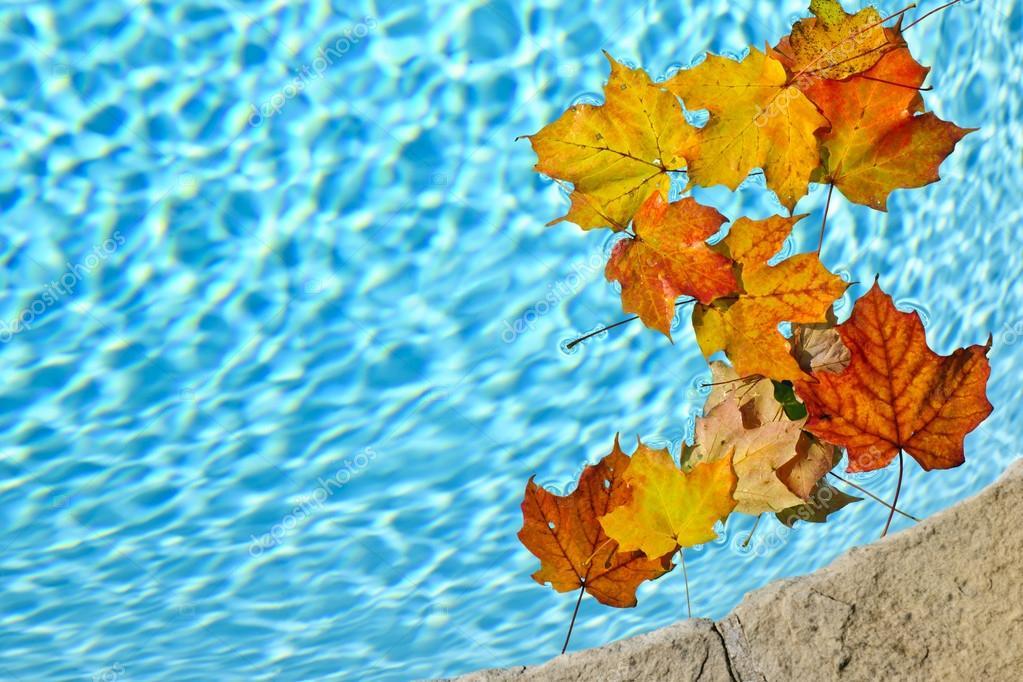 piscina outono
